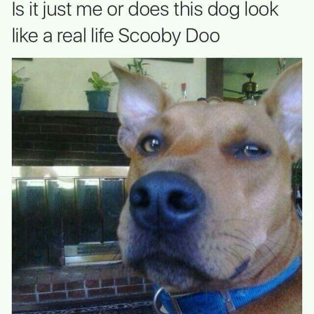 Real life Scooby Doo
