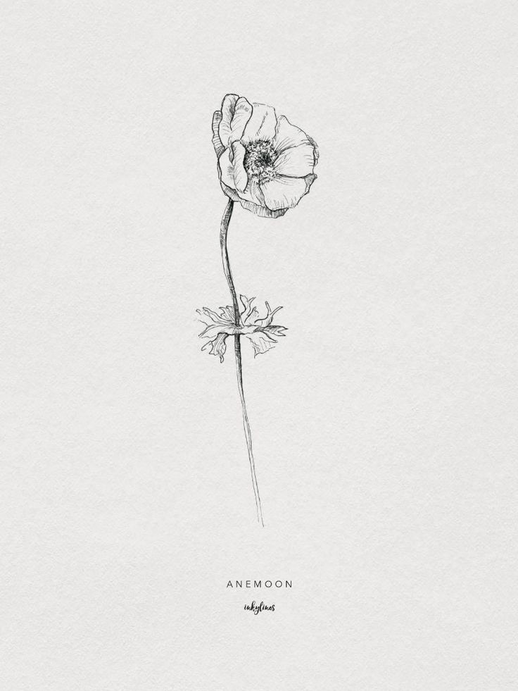 Anemone flower drawing, the flower is a reminder to enjoy the moment in order to take in opportunities at the right time.