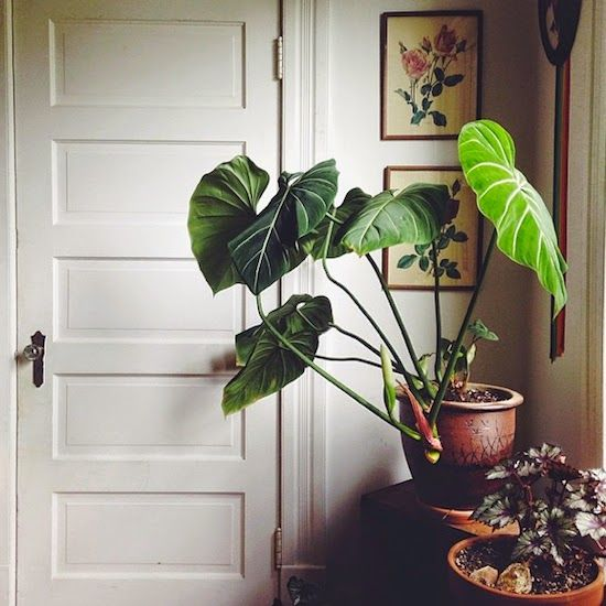 I seem to be attracted to house plants and green interiors all of a sudden!