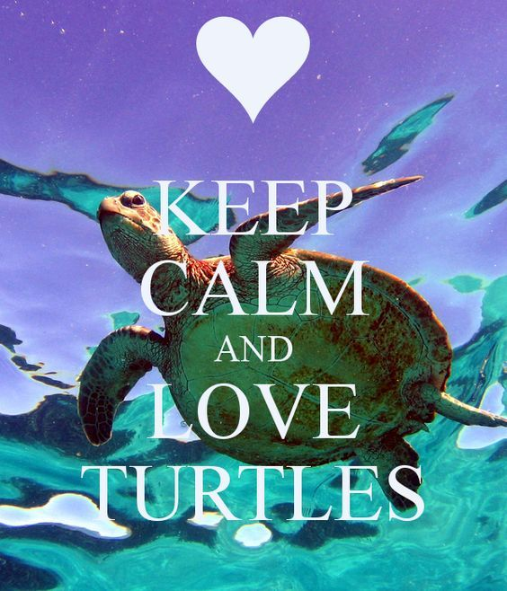'KEEP CALM AND LOVE TURTLES' Poster