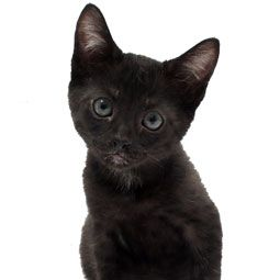 Throughout history, black cats have brought luck — both good and bad — to all types of cat owners.