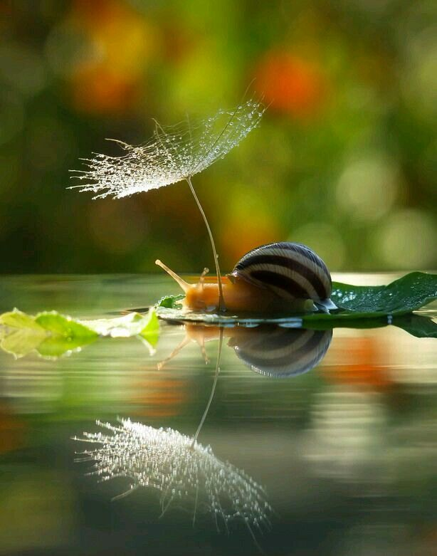 Snail on the boat