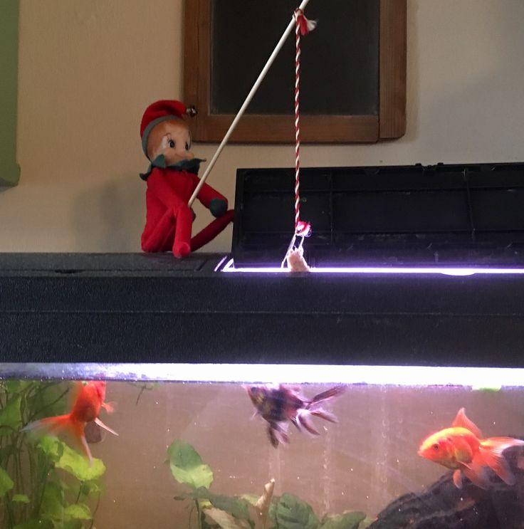 8. Dec.  Julius fisker efter guldfisk