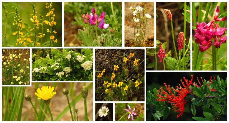 flores Bariloche Argentina