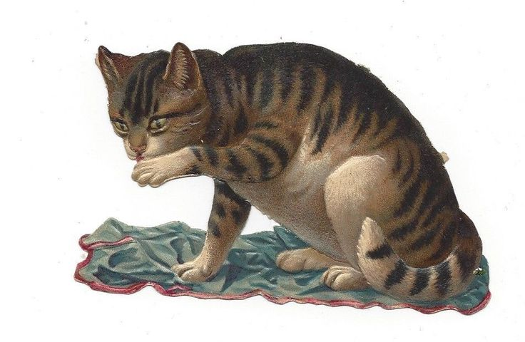 Victorian Die Cut Scrap of Cat Grooming his paw