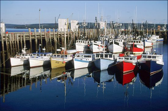 Digby Scallop Boats -- Bless the scallop fishery!! #WinWithDigbyPines
