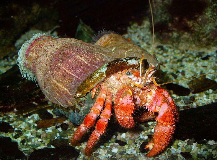 Lobster In Aquarium Stock Photo - Image: 76851940