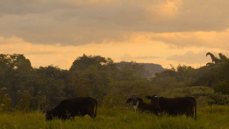 Sound Ex Machina - Animal Farm  [Teaser]