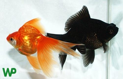Alimentación y accesorios para peces. Tienda de mascotas online Wakuplanet.com