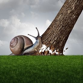 picture of symbols - Strength concept as a snail pushing down a large tree trunk as a business success metaphor for the power of motivation and a symbol for confidence and courage to accomplish anything - JPG