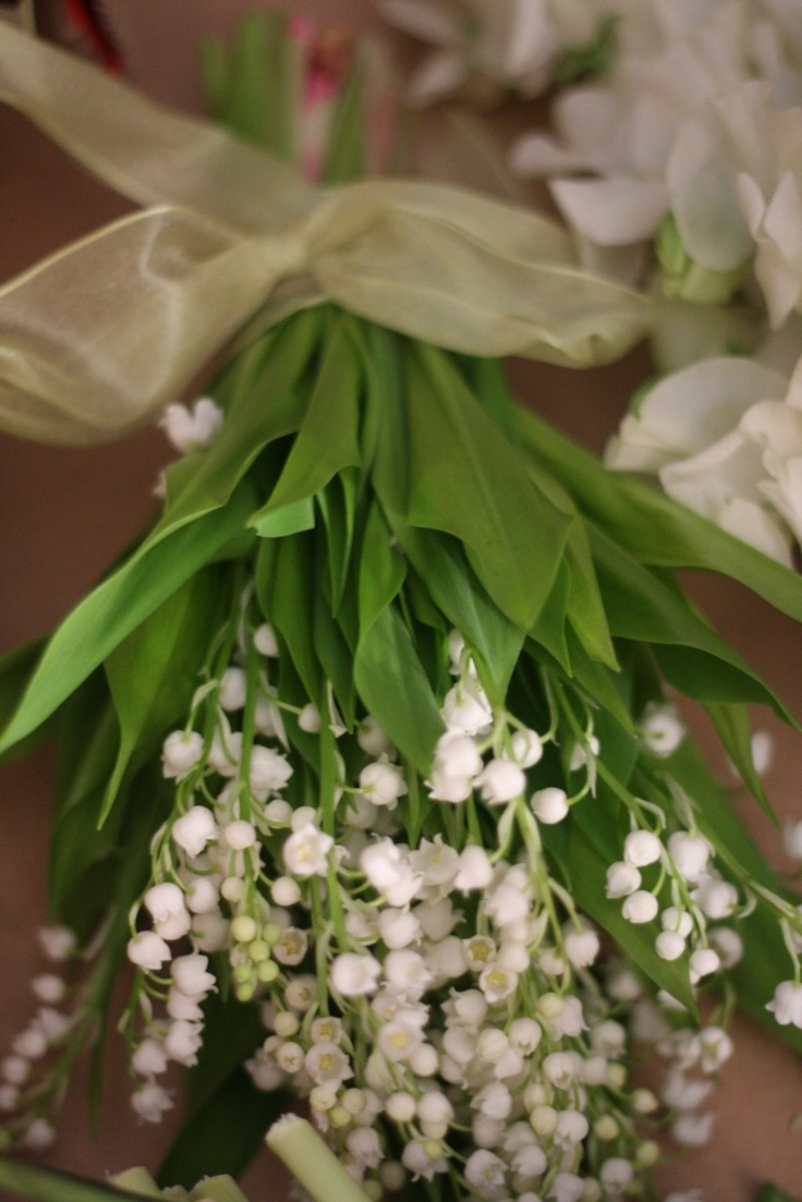 148 best lily of the valley images on pinterest lily of the valley grandma grew lily of the valley izmirmasajfo