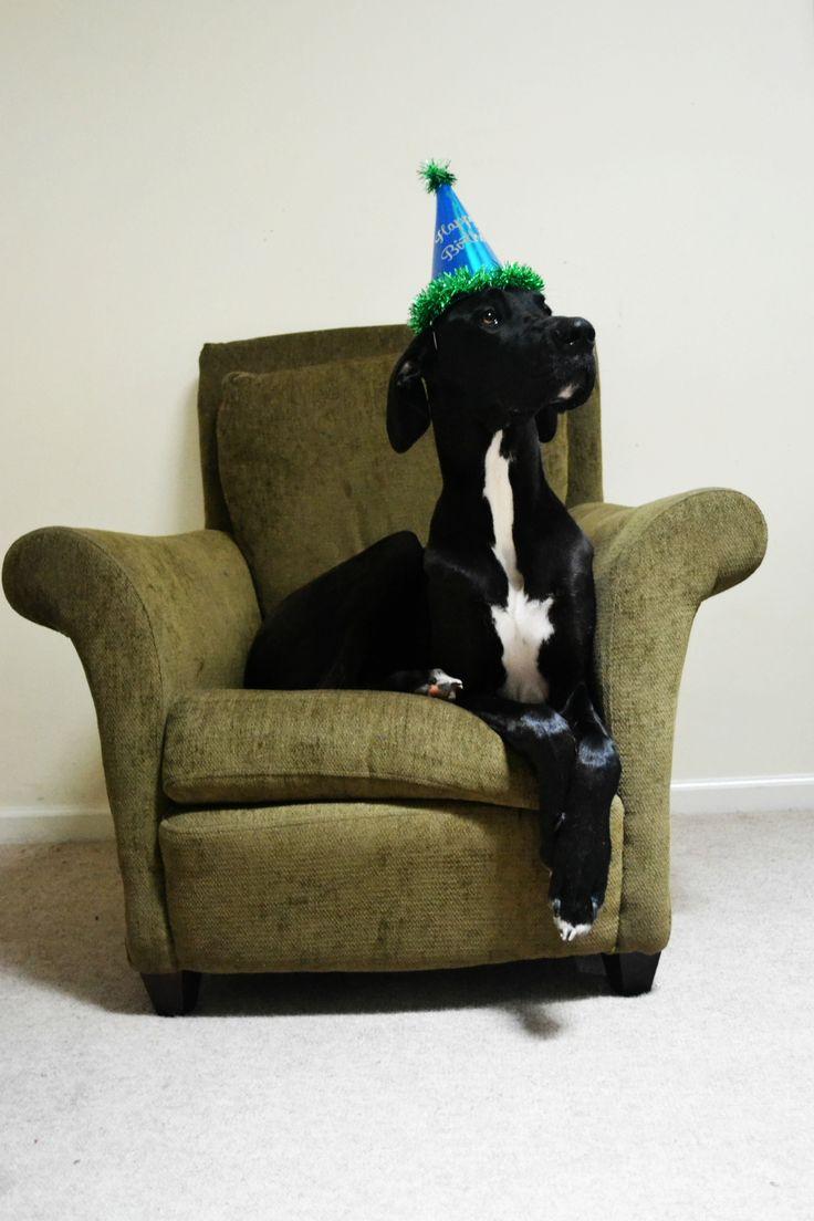 Great Dane First Birthday Dog Dog Birthday Happy