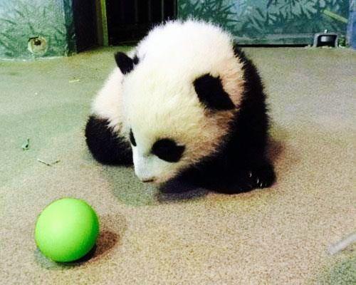 Bao Bao baby