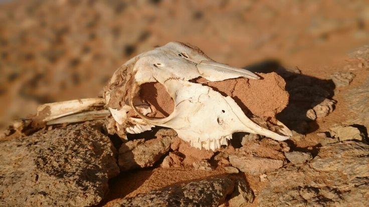 Desert and bones 1