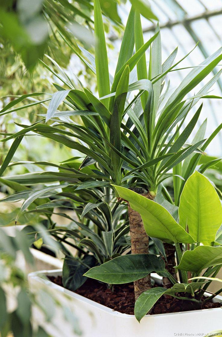 plante absorbe humidit plante absorbe humidit with plante. Black Bedroom Furniture Sets. Home Design Ideas