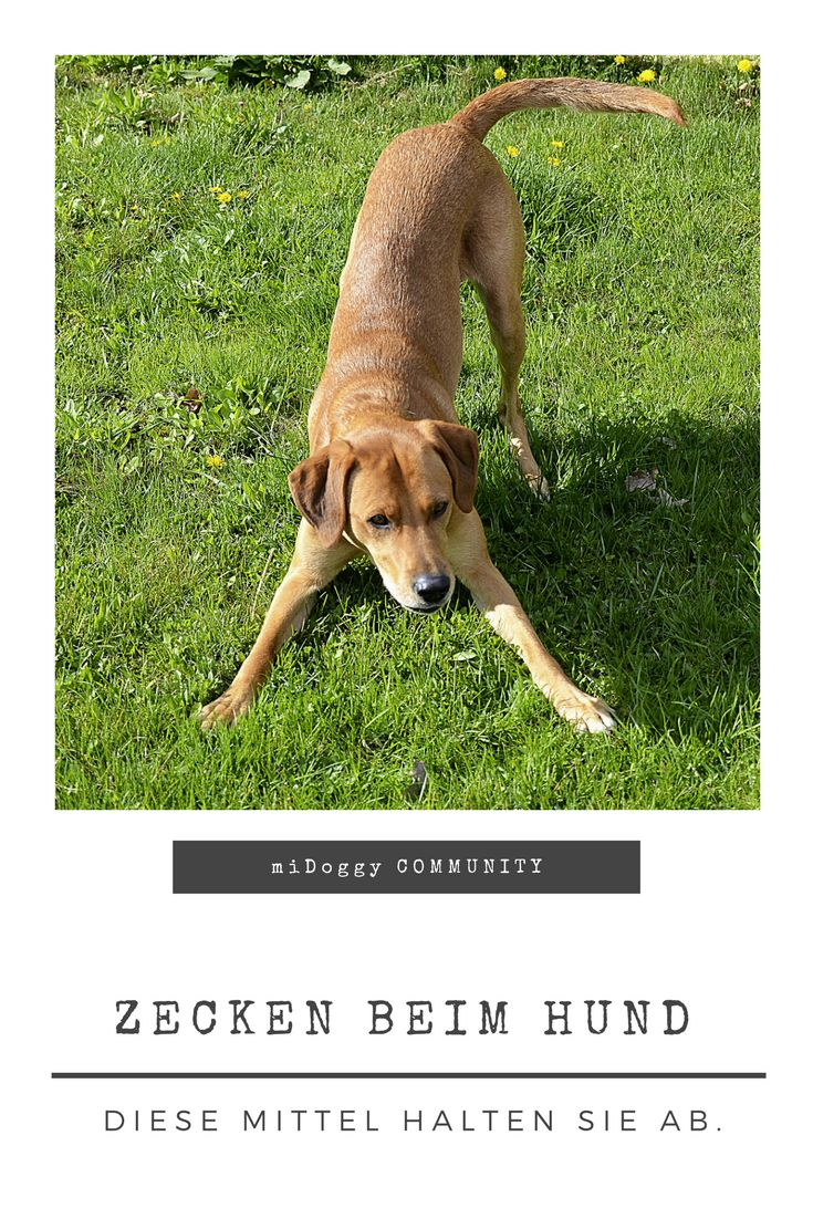    #Hund    Ideen    #Hunde    Tipps    Tricks    Ideen    Liebe    Welpen    Bilder    #Zecken