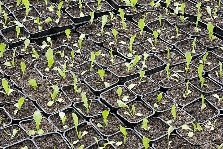Sous abri chaud, en place, en pépinière, ... quand semer les variétés potagères et quand les récolter ?