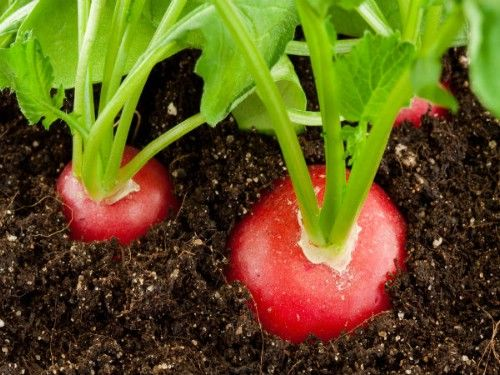 Growing fruits, vegetables, and herbs in containers and pots