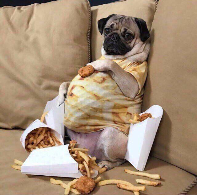 Собака похудела и не может встать