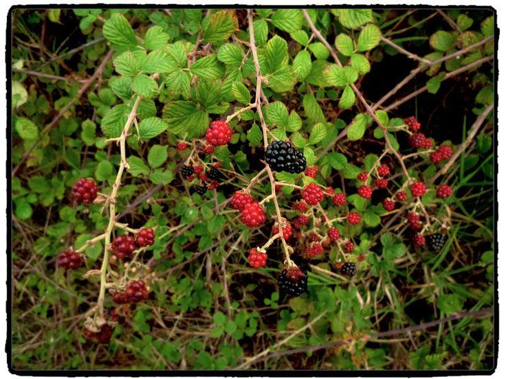 Berries  (by Xik) http://www.myhappyart.gr/2013/11/by-christina.html