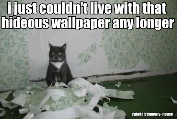 Oooops!: Cats, Animals, Funny Cat, Wallpaper, Crazy Cat, Funny Stuff, Funnies, Funny Animal