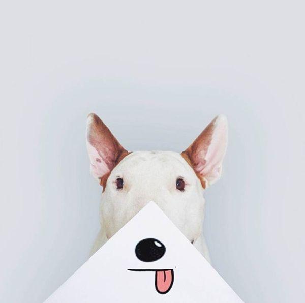 dog-art-3