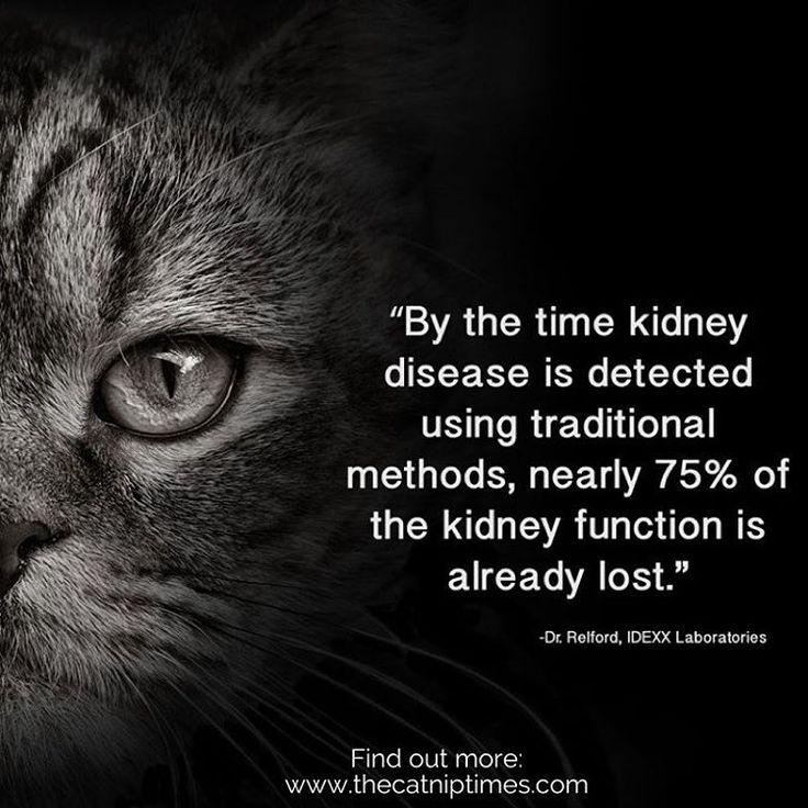 17 best images about feline kidney food treatments on pinterest renal diet heart disease and. Black Bedroom Furniture Sets. Home Design Ideas