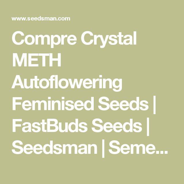 Compre Crystal METH Autoflowering Feminised Seeds   FastBuds Seeds   Seedsman   Sementes de Canábis