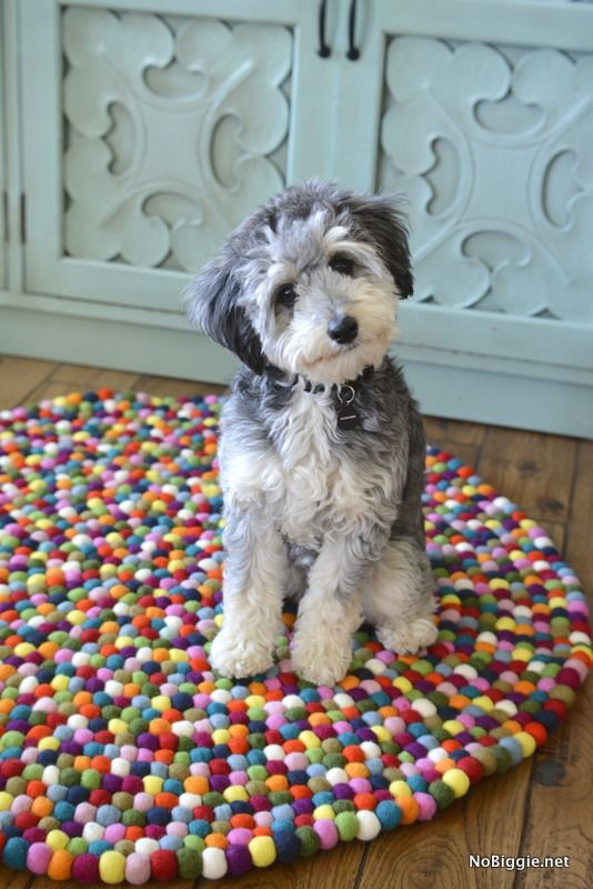 """Awesome review by @KamieBigler about our multicolor piece. Thank you Kami! Read """"Tiny Tubbs plus the felt ball rug"""" to see why Kami loves her new rug. http://www.nobiggie.net/tiny-tubbs-plus-the-felt-ball-rug/"""