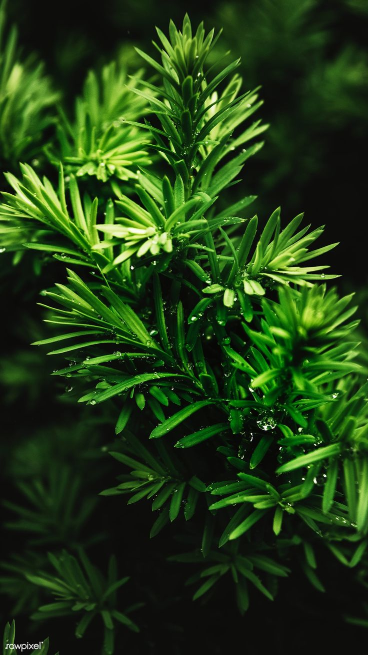 Green bush pattern mobile phone wallpaper | free image by rawpixel.com / Teddy R…