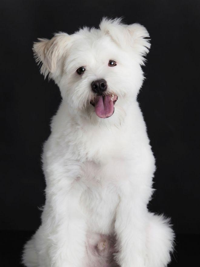 10 Nombres Para Perro Con Significado Nombres De Perros Nombres Para Perros Pitbull Nombres De Animales