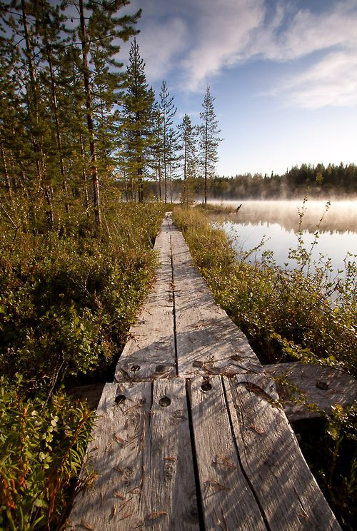 and the forest dreams eternally......., travelingcolors: Lapland | Finland (by Forester...
