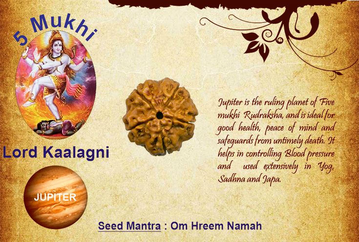 Benefits of 5 mukhi Rudraksha: Seed Mantra : Om Hreem Namah God: Lord Kaalagni / Planet: Jupiter  Jupiter is the ruling planet of Five mukhi Rudraksha, and is ideal for good health, peace of mind and safeguards from untimely death. It helps in controlling Blood pressure and used extensively in Yog, Sadhna and Japa.  http://www.rudralife.com/Rudraksha/details.php?id=12