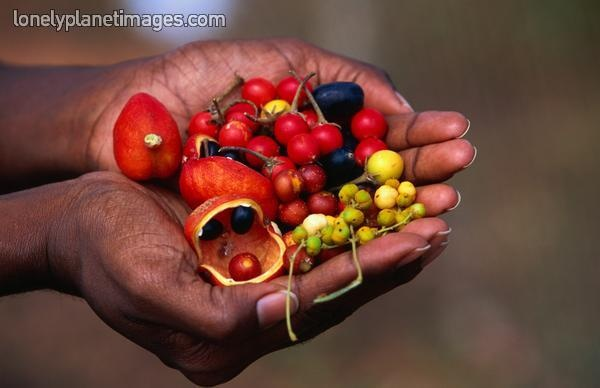Bush tucker which includes Cedar Bay Cherry. - Lonely Planet Images