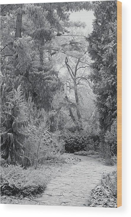 Jenny Rainbow Fine Art Photography Wood Print featuring the photograph Enchanted Winter Garden. Black And White by Jenny Rainbow