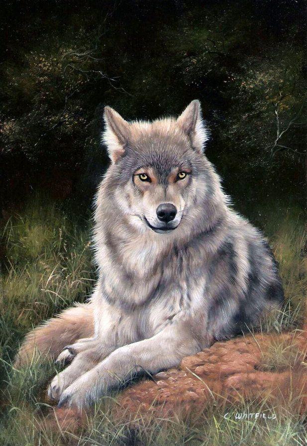 Открытка волчонок, день рождения года