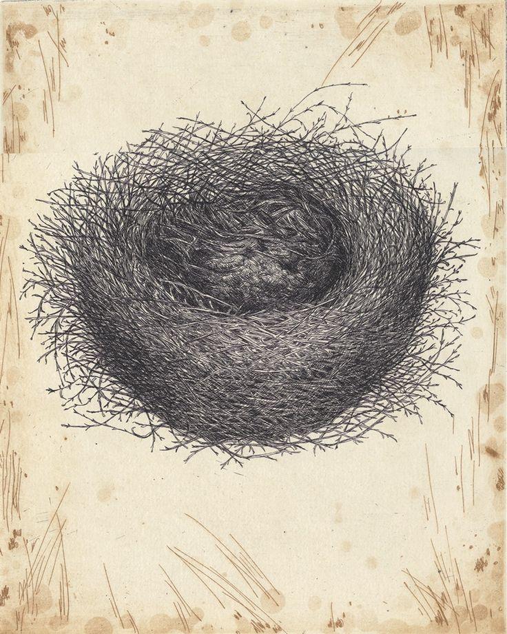 Red Wattle Bird nest etching Artist Sandi Rigby