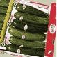 Cultivo del calabacín:   Plagas, enfermedades y fisiopatías en el cultivo de calabacines