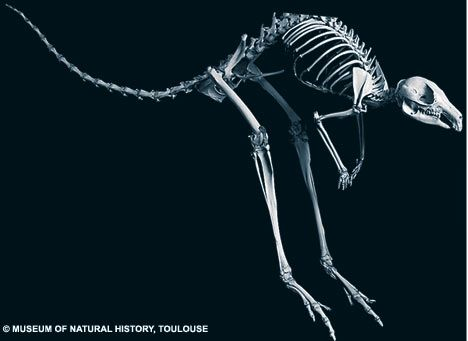 Close to the bone: The amazing pictures which reveal how evolution has shaped…