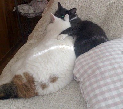 Nasu and Julia napping.