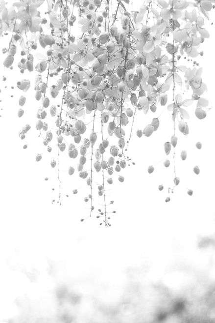 Soft Floral Inspiration - black & white photography