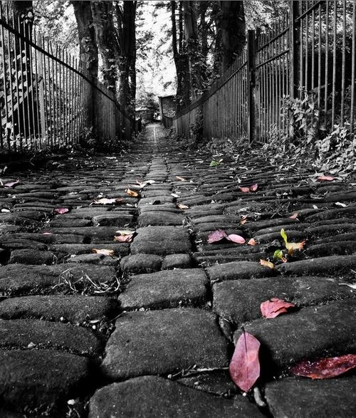 Old cobbled path artistic photographycolor photographysplash of colorcolor 2black white