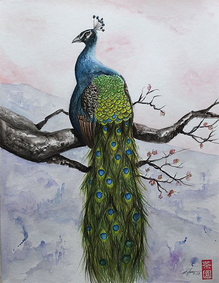 peacock by rchaem.deviantart.com on @DeviantArt