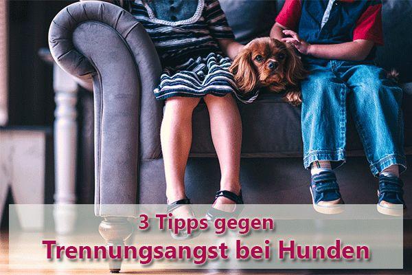 Dein Hund zerkaut Schuhe, den Müllbeutel oder bellt pausenlos, wenn er allein ist? Hole dir jetzt 3 Tipps gegen Trennungsangst bei Hunden in unserem Blog!