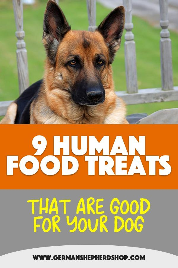 9 Human Food Treats That Are Good For Your Dog German Shepherd