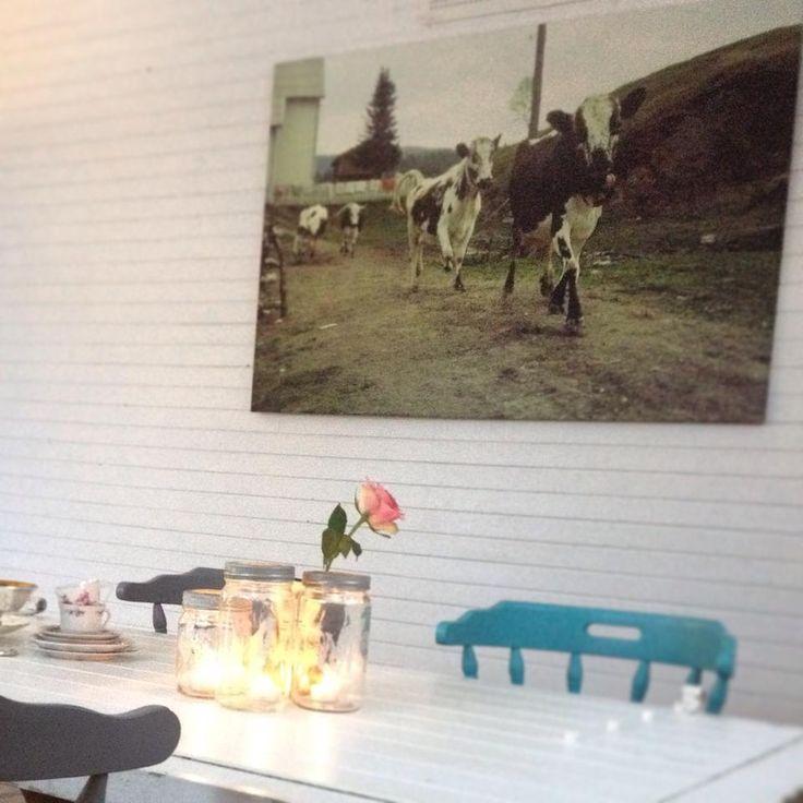 Kroglia kulturgård i Rana er rotfestet i natur og kultur i Grønfjelldal. Eldbjørg Fagerjord har funnet sitt paradis og deler det med andre som er ute etter muntre opplevelser!