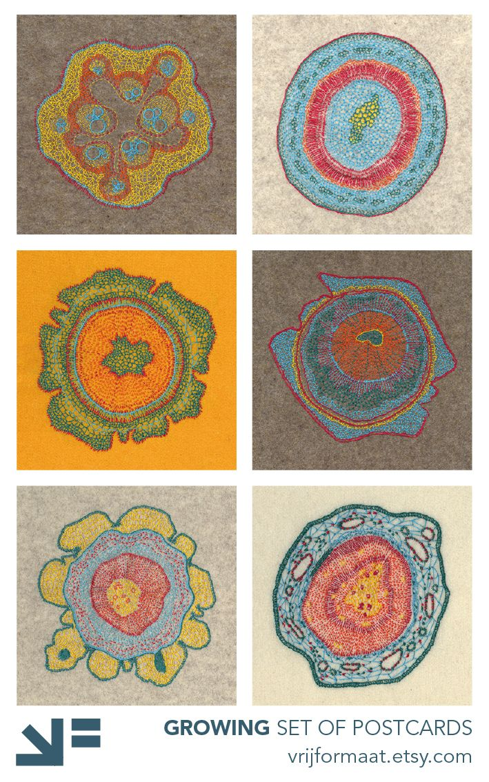 The series Growing consists of a set of 6 postcards, with embroidery based on microscopic pictures of plant cells. Inspired on the images, they are embroidered freehand on felt, then scanned and printed on 350 grams white paper. The result is a set of beautiful and unusual greeting cards, suitable for many occasions. The set contains these 6 cards: - Cucumis - Hoya - Taxus - Thuja - Pinus #1 - Pinus #2 size: 5.8 x 5.8 inch / 14,8 x 14,8 cm)