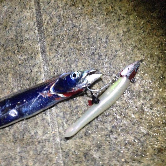 【ryoturikiti】さんのInstagramをピンしています。 《「今年40回目の釣り」 ネット情報があったので行ってみると貸し切り‼️ あれ釣れないのかな?と思いながら1投目キャスティング‼️ すると1投目から釣れました。 それからポツポツ釣れ合計10本ぐらい釣れたので満足です 最大指4本でした #釣り#ワインド#タコ#海》