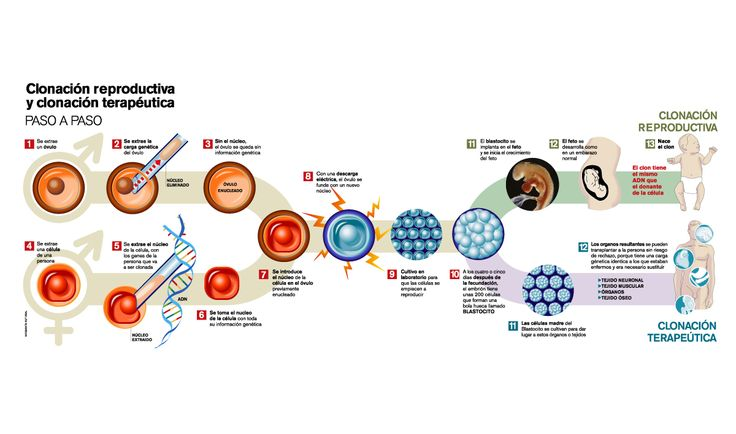 INGENIERIA GENETICA Y ALGO MAS