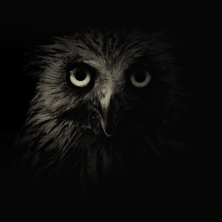 Dark and Moody Zoo Animal Portraits by Alex Teuscher. Now that's one intense looking owl!